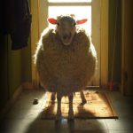 Black Sheep : L'attaque des mouton-garous