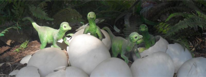 Reconstitution d'éclosions dans d'un nid de dinosaure (cc by sa nc LnArnal)