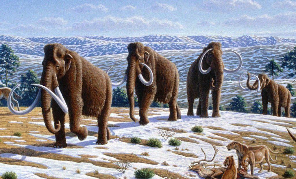 Troupeau de Mammouth laineux marchant en file dans un paysage légèrement eneigée